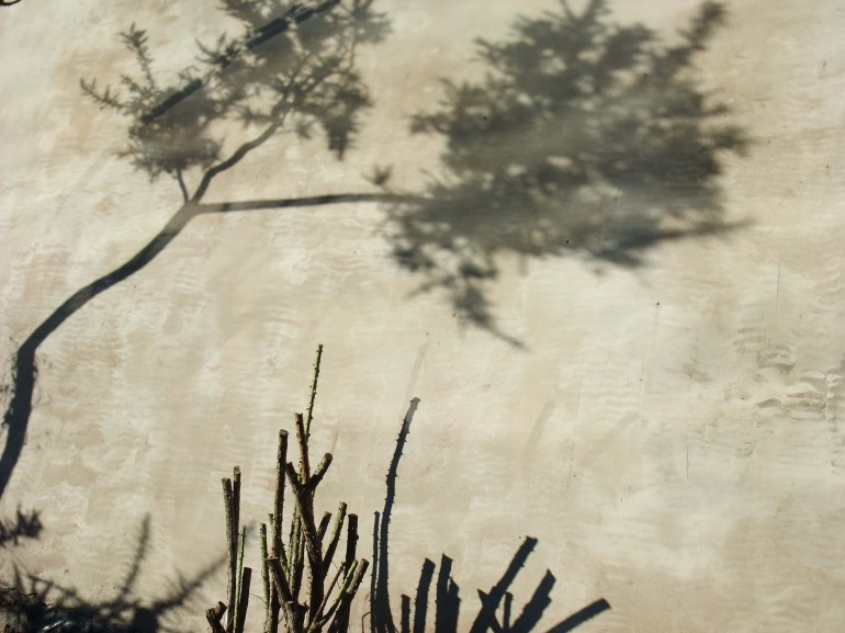Helen Sargeant ©, Tree shadow, 2013